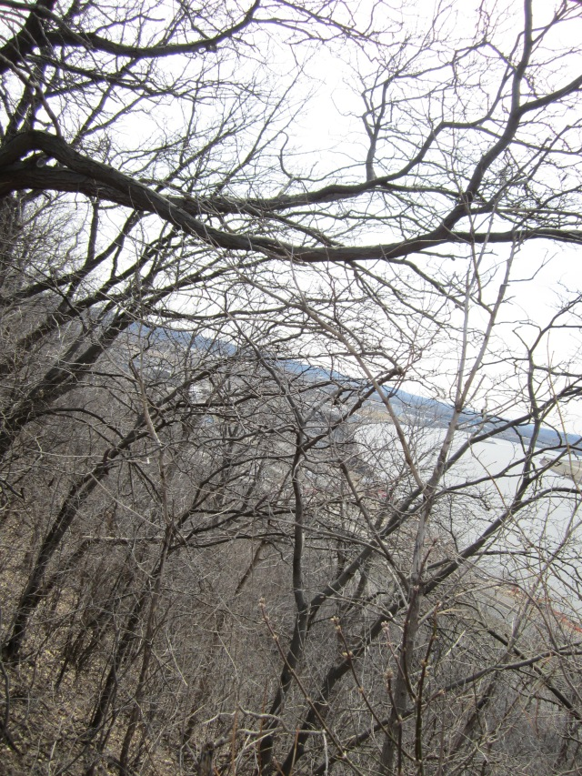 Anxiety, bare trees, possibilities.